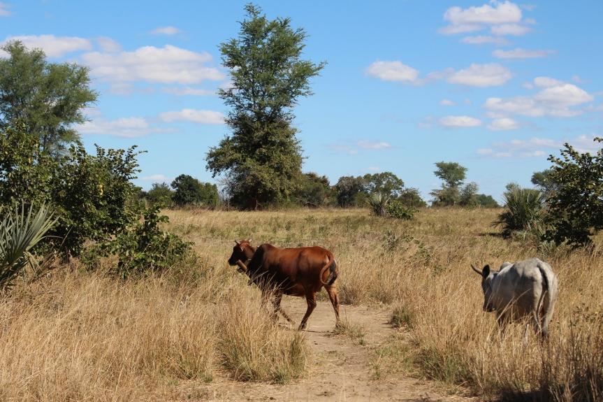 The Photo Series:Zambia